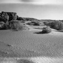 Desert Carpet