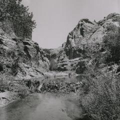 Beaver dam in Navajo Canyon